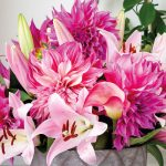 Nieuwe catalogus: Summer Flowering Collection 2021